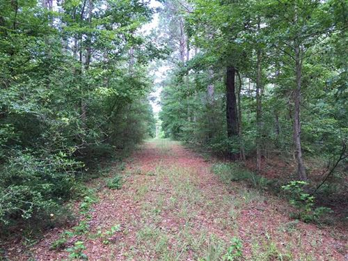Dodson Timber Tract, Winn Parish : Dodson : Winn Parish : Louisiana