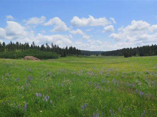 Antelope Draw : Hill City : Pennington County : South Dakota