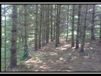 Beautiful Partially Wooded Homesite : McArthur : Vinton County : Ohio