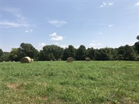 Established Pasture & Mature Trees : Madison : Morgan County : Georgia