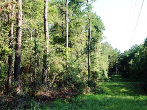 16 Acres In Covington County : Kola : Covington County : Mississippi