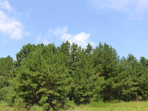 18 Acres In Jones County, Ms : Soso : Jones County : Mississippi
