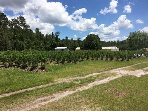 10 Acre Nursery And Blueberry Farm : Lake Wales : Polk County : Florida