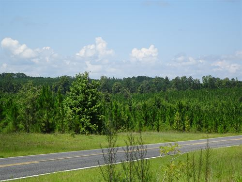 The Pine Straw Tract : Rockledge : Laurens County : Georgia