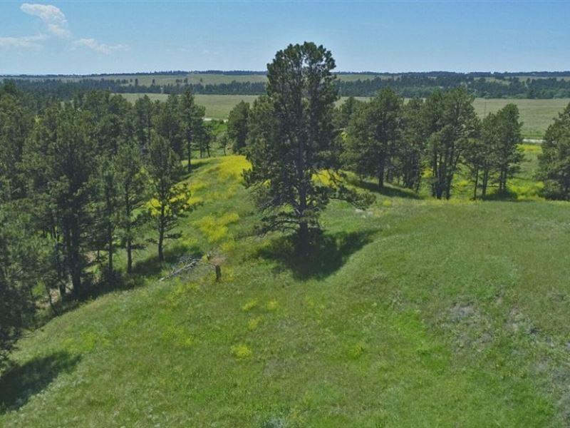 Pine Ridge Range And Timber : Crawford : Dawes County : Nebraska
