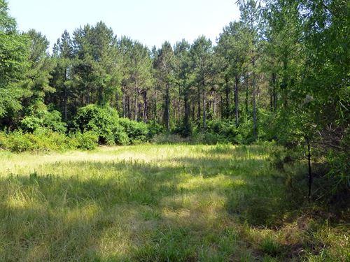 21-009 Freeman Tract : Evergreen : Conecuh County : Alabama