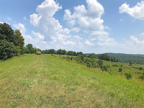 Buck Creek Rd - 163 Acres : Willow Wood : Lawrence County : Ohio