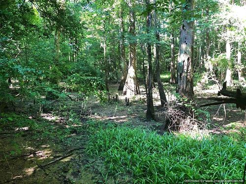 Awesome Hunting & Timber Tract : Columbia : Marion County : Mississippi