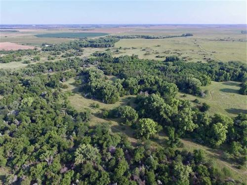 240 Acres of Excellent Hunting : Saint John : Stafford County : Kansas