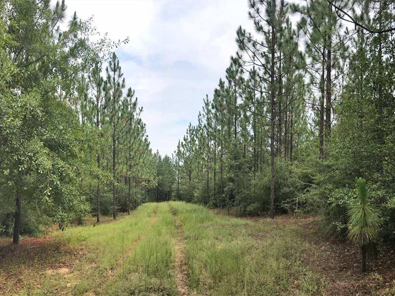 Mable Leigh Tract : Brewton : Escambia County : Alabama