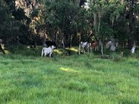Lake Gentry Farms - 34.5 Acres : Saint Cloud : Osceola County : Florida