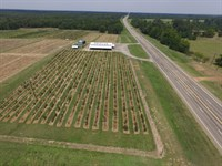 Retail Peach/Produce Facility : Gilmer : Upshur County : Texas