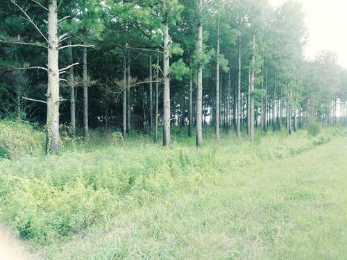 Beautiful Timberland With Creek : Cottonwood : Houston County : Alabama