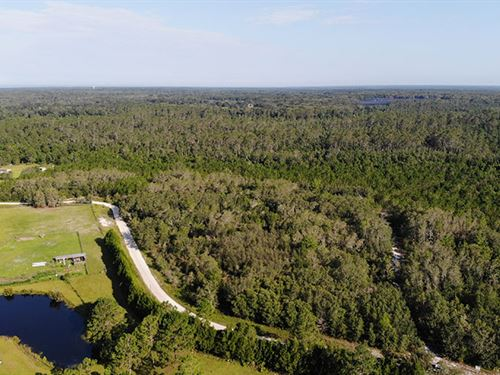 Volusia County Recreational Tract : Pierson : Volusia County : Florida