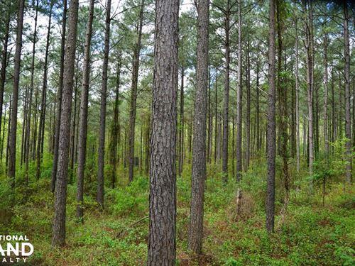 Blue Sky Farm South : Cullman : Alabama