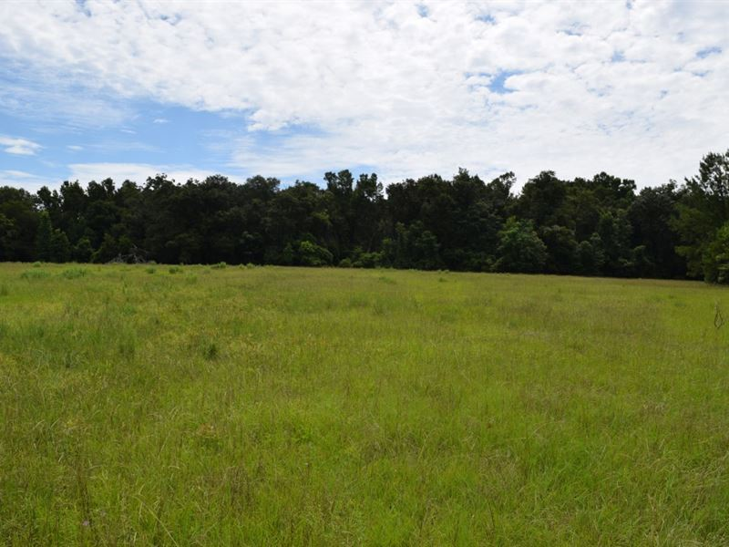 Beautiful 10.8 Acres : Brooksville : Hernando County : Florida