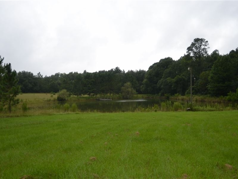 Live Oak Pond : Fitzgerald : Irwin County : Georgia