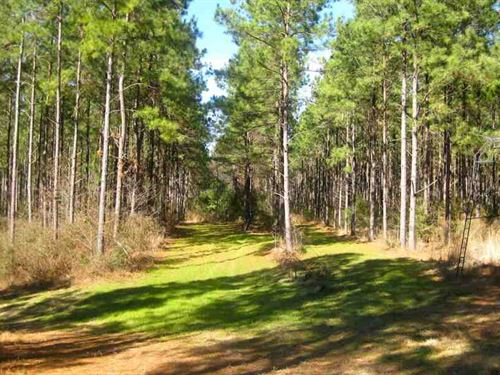 277 Acres With Cabin For Sale : Silver Creek : Lawrence County : Mississippi