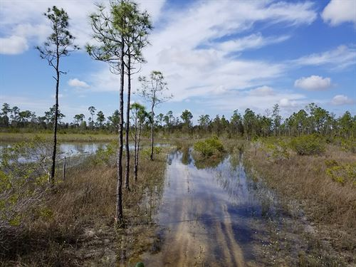 Cape Coral Acreage : North Fort Myers : Lee County : Florida