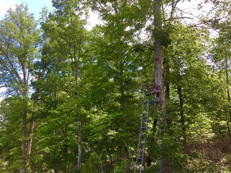 Great Hunting Tract Big Hardwoods : Fort Valley : Crawford County : Georgia