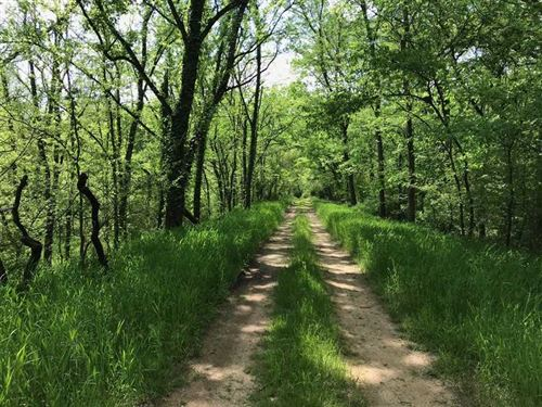 Great Recreational Tract in Maury : Columbia : Maury County : Tennessee