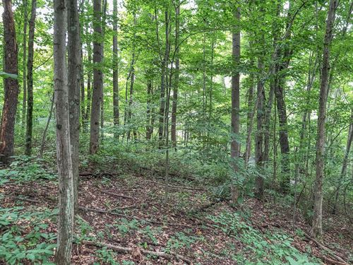 Hopewell Rd - 13 Acres : Cambridge : Guernsey County : Ohio