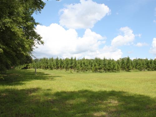 36 Acres In Perry County, Ms : McLain : Perry County : Mississippi