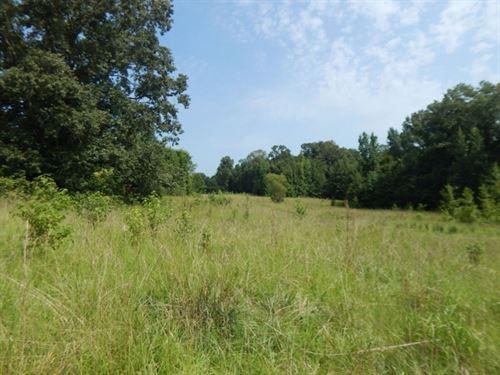 125 Acres In Yazoo County : Little Yazoo : Yazoo County : Mississippi
