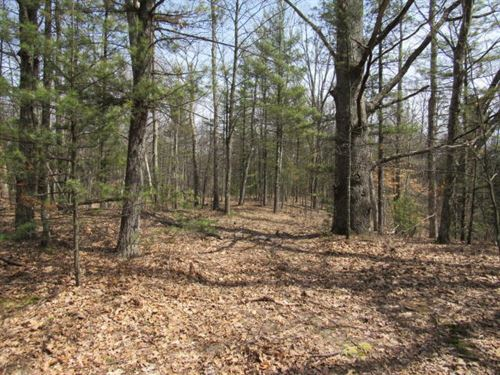 Hunting Land With Creek : Mears : Oceana County : Michigan