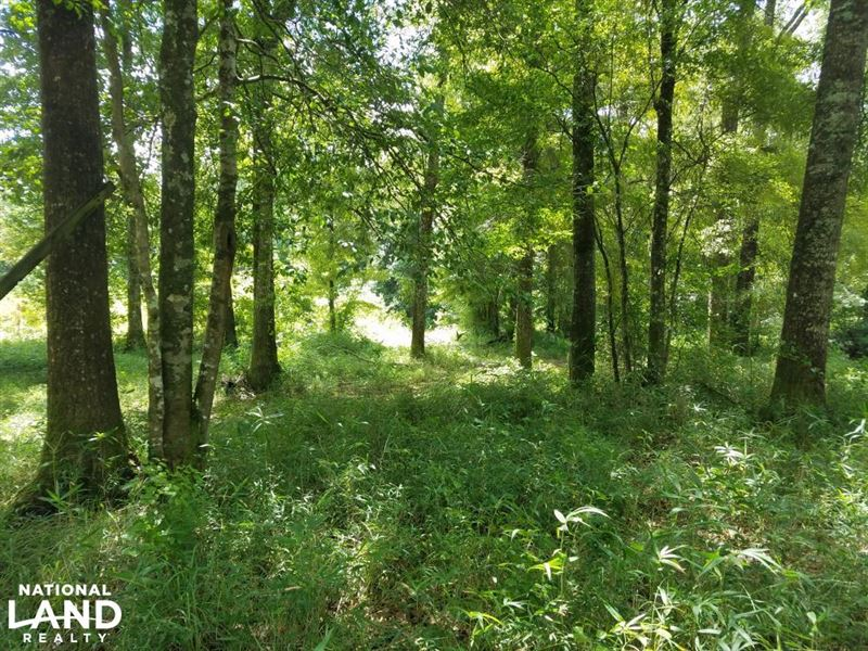 Pea River Hunting/Timber Tract : Clio : Barbour County : Alabama