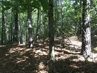 36 +/- Acres In Fayette County, Al : Fayette : Fayette County : Alabama