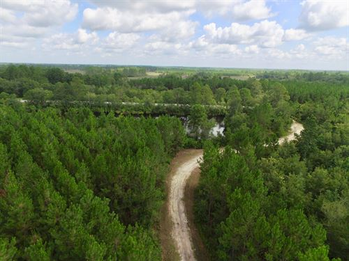 420 Acres Suwanoochee Creek Timber : Homerville : Clinch County : Georgia