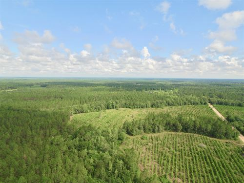 381 Ac Recreational / Hunting Tract : Hinesville : Long County : Georgia