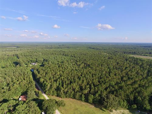 90+ Acre Savannah Plantation Tract : Pembroke : Bryan County : Georgia