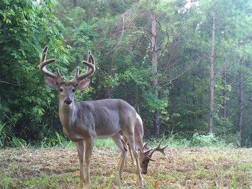 332 Acres Wilkinson CO : Woodville : Wilkinson County : Mississippi