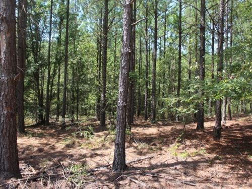 Small Secluded Hunting Tract : Rochelle : Wilcox County : Georgia
