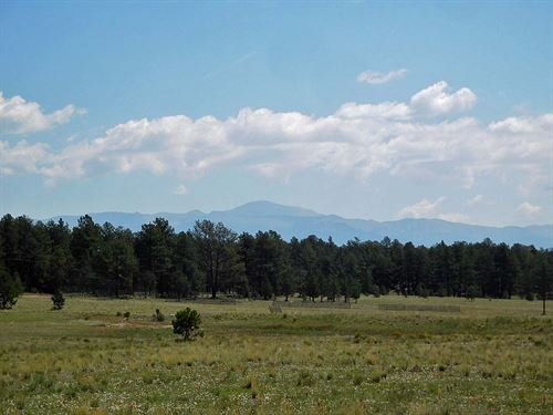 Gentle And Beautiful : Guffey : Park County : Colorado