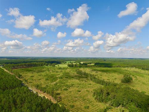 69 Acre Pine Plantation / Homesite : Douglas : Coffee County : Georgia