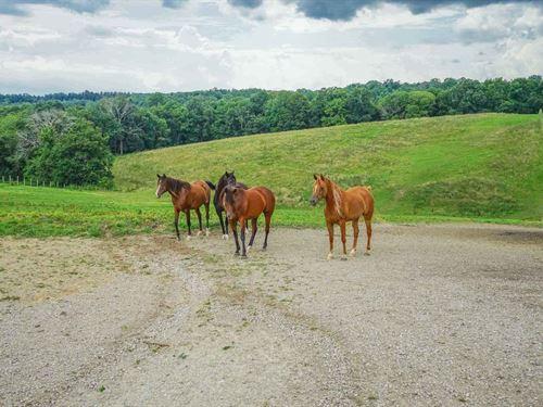 Kreashbaum Rd - 46 Acres : Rockbridge : Hocking County : Ohio
