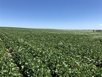 Walworth County, Sd Farm Land : Glenham : Walworth County : South Dakota