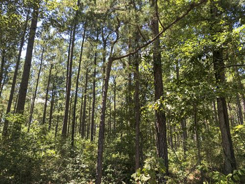 111 Acres Paces Creek : Corrigan : Polk County : Texas