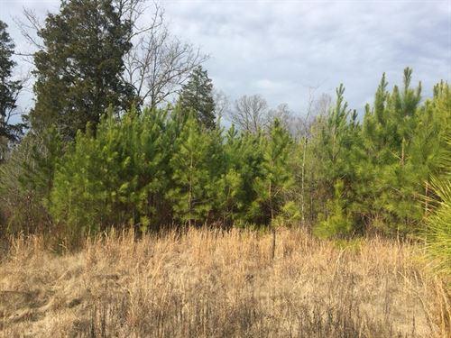 Rural Homesite In Chapin, Sc : Chapin : Lexington County : South Carolina