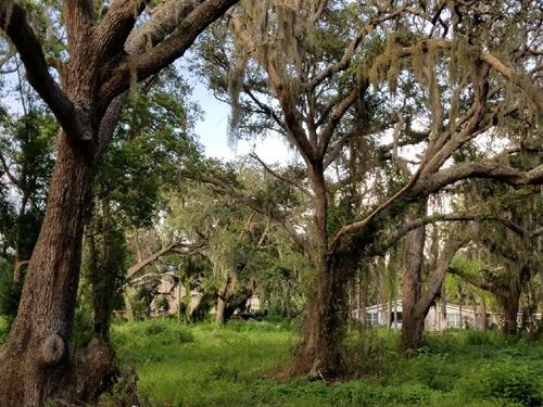 Gorgeous 9.23 Acres With Potential : New Port Richey : Pasco County : Florida