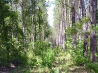 Thompson West Tract : Walterboro : Colleton County : South Carolina