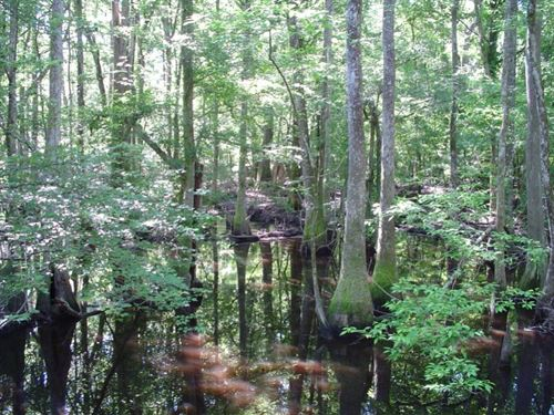 Perry Branchville Tract : Branchville : Orangeburg County : South Carolina