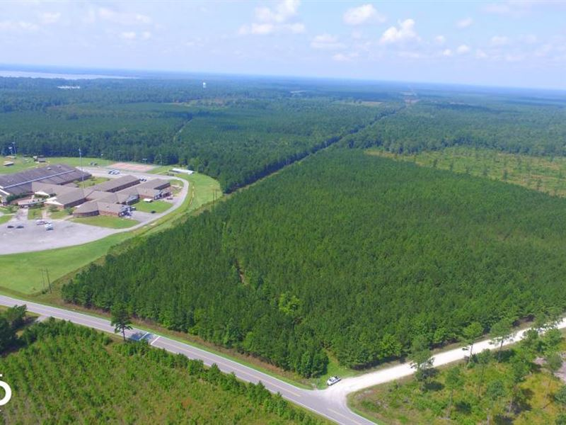 Lake Waccamaw Timber And Recreation : Lake Waccamaw : Columbus County : North Carolina