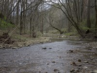 Beautiful Woods With Views : Mt Vernon : Rockcastle County : Kentucky