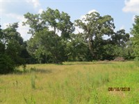 Hunting Property & Camp House : Warriorstand : Macon County : Alabama