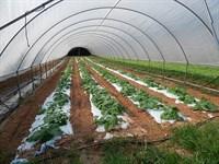 Usda Certified Organic Farm : Newborn : Newton County : Georgia