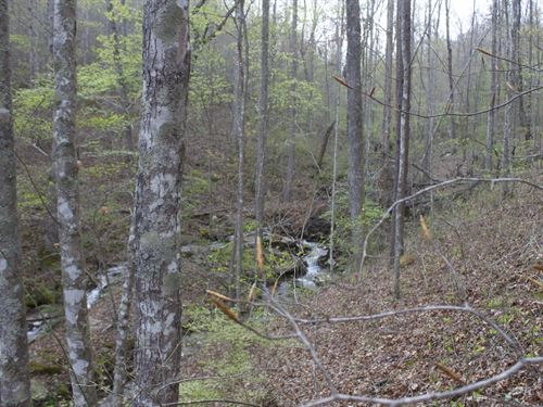 Gorgeous Stream And Forest Retreat : Dunlap : Sequatchie County : Tennessee